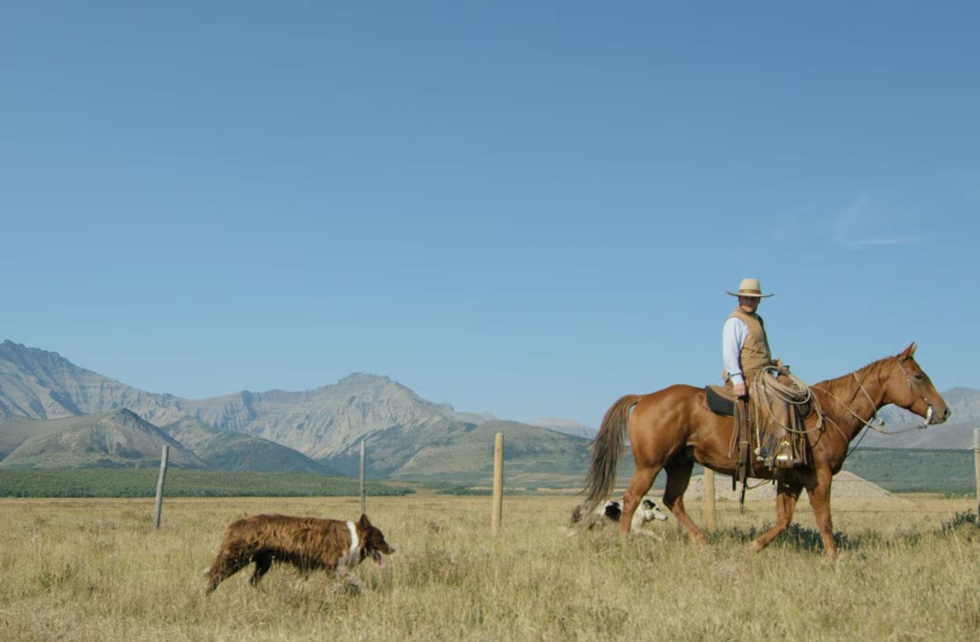 YU Cattle Company